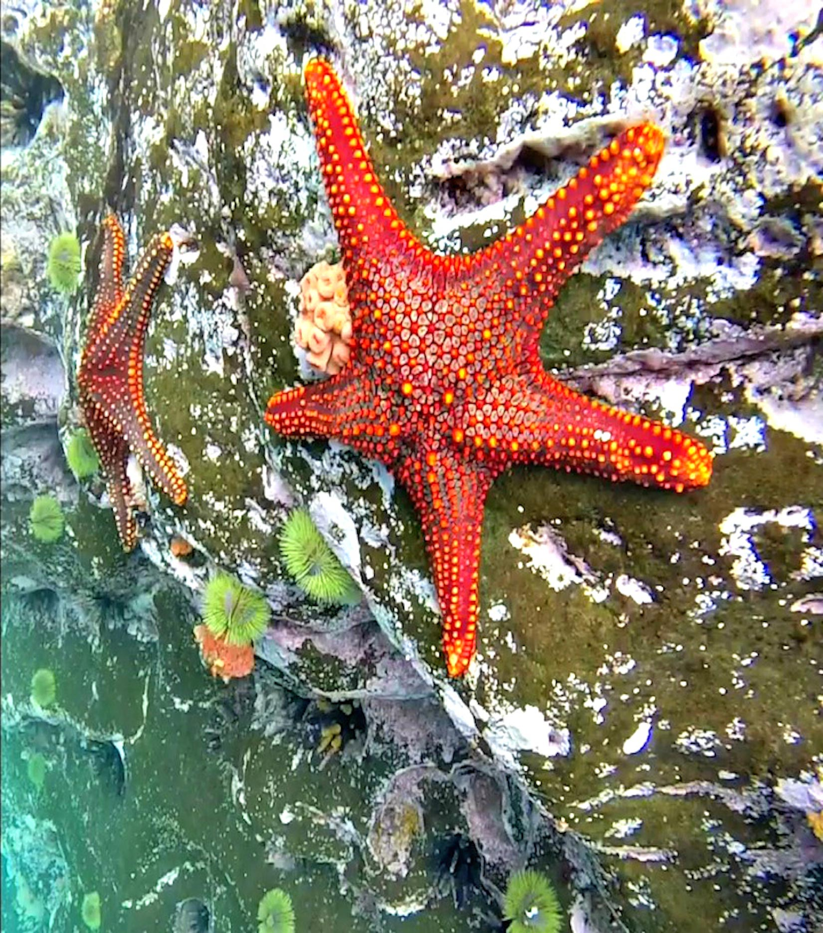 starfish on a rock in the ocean